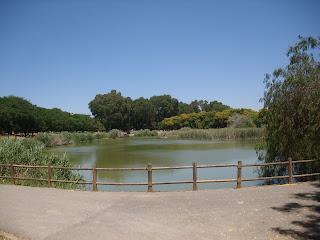 Vista del lago más grande del parque, rodeado de árboles.
