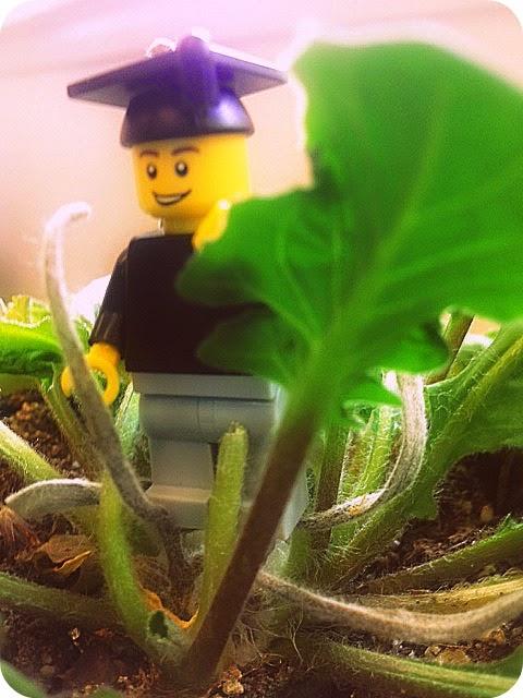 Lego Grad - The Trip Grad Gift