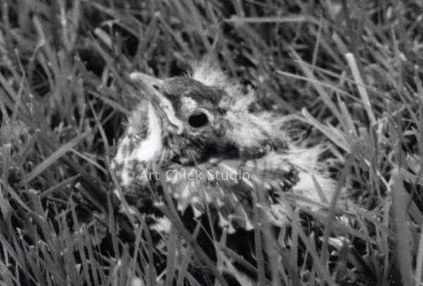 Baby Bird Photograph