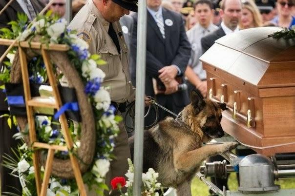 Фиго, служебная собака полиции штата Кентуки, прощается со своим хозяином, который погиб на задании.