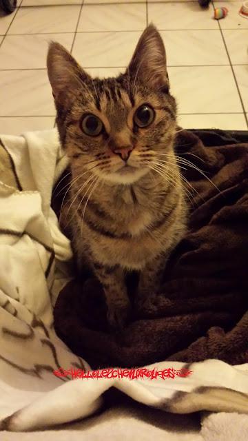 chat mignon qui me regarde avec de grands yeux www.hellolescheveuxrouges.com