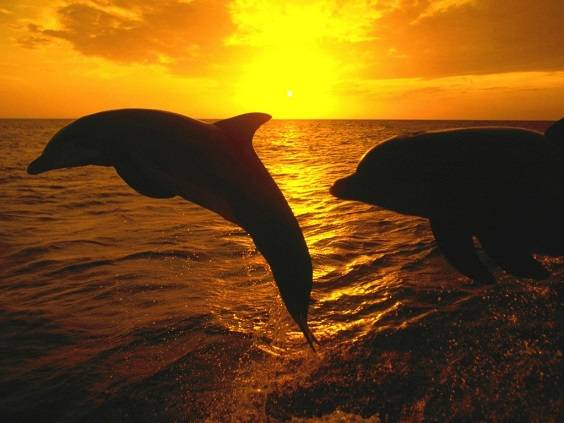 Delfines al atardecer