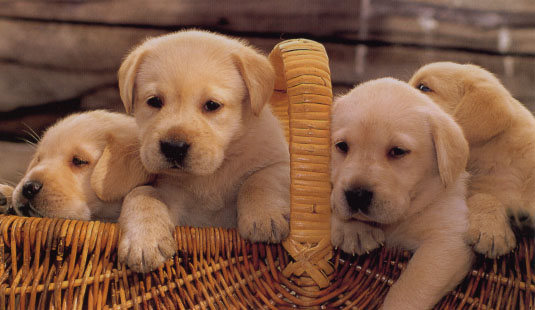 My Top Collection: Pet dogs pictures