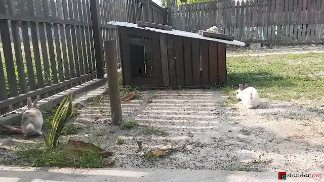 Rumput Tetanggaku Ternyata Memang Lebih Hijau-1