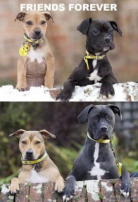 Cães filhotes e adultos