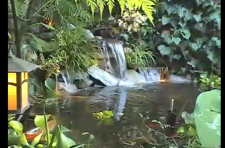 http://www.funmag.org/video-mag/mix-videos/most-beautiful-backyard-ponds/