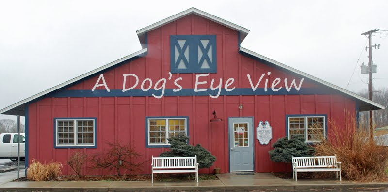 A Dog's Eye View