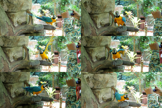 Funny Macaw Theatrics