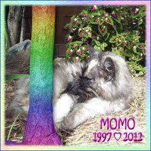 RIP MoMo