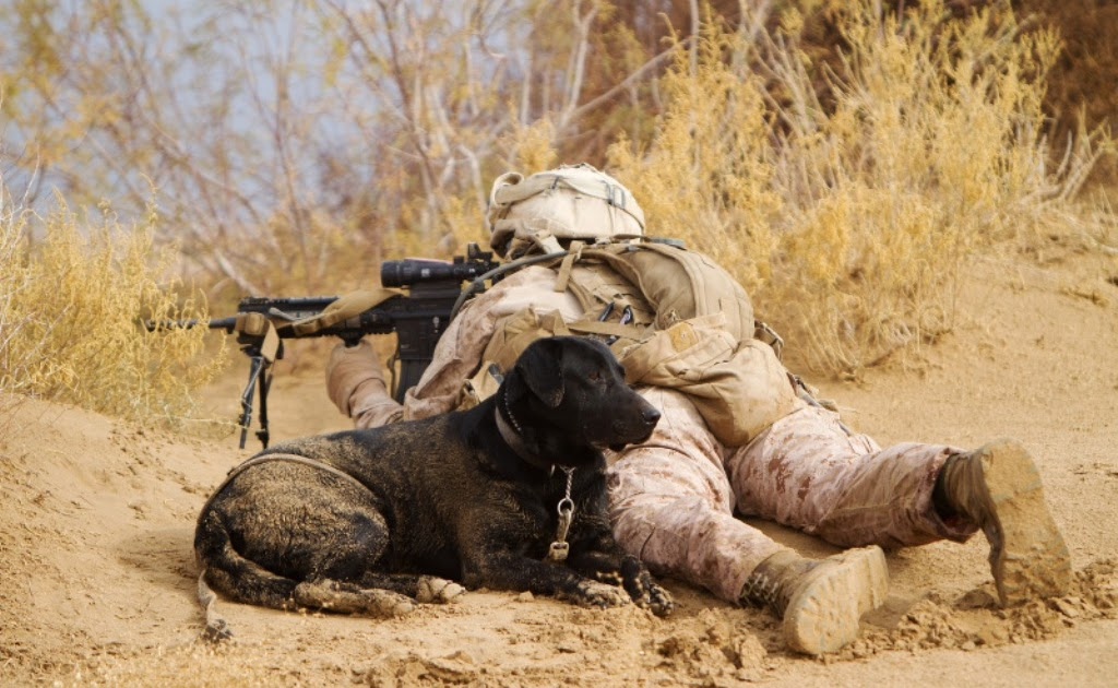 improvised explosive devices  ieds  detection dog in