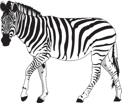 The zebra always knows best!