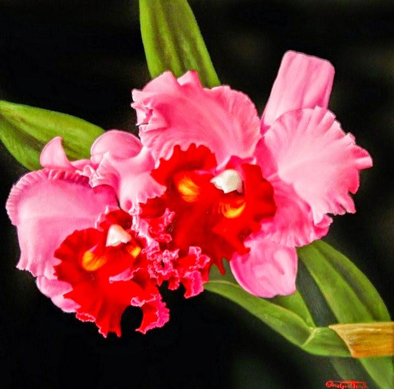 bodegones-con-orquideas-diferentes-colores