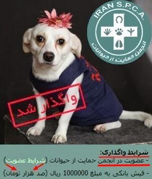 با انجمن حمایت از حیوانات ایران آشنا شوید!