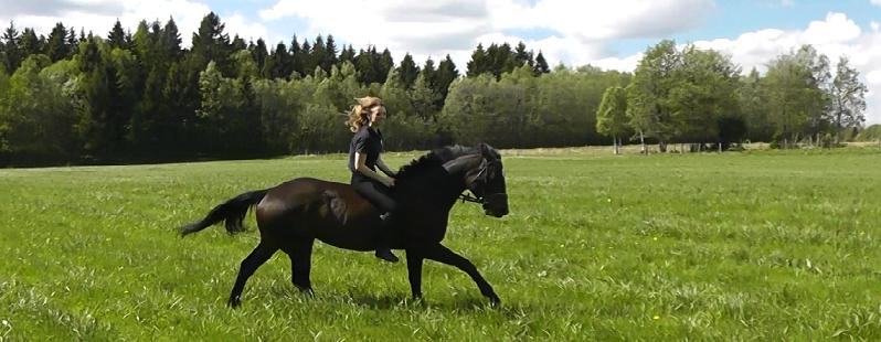 Jessicas lilla hästblogg