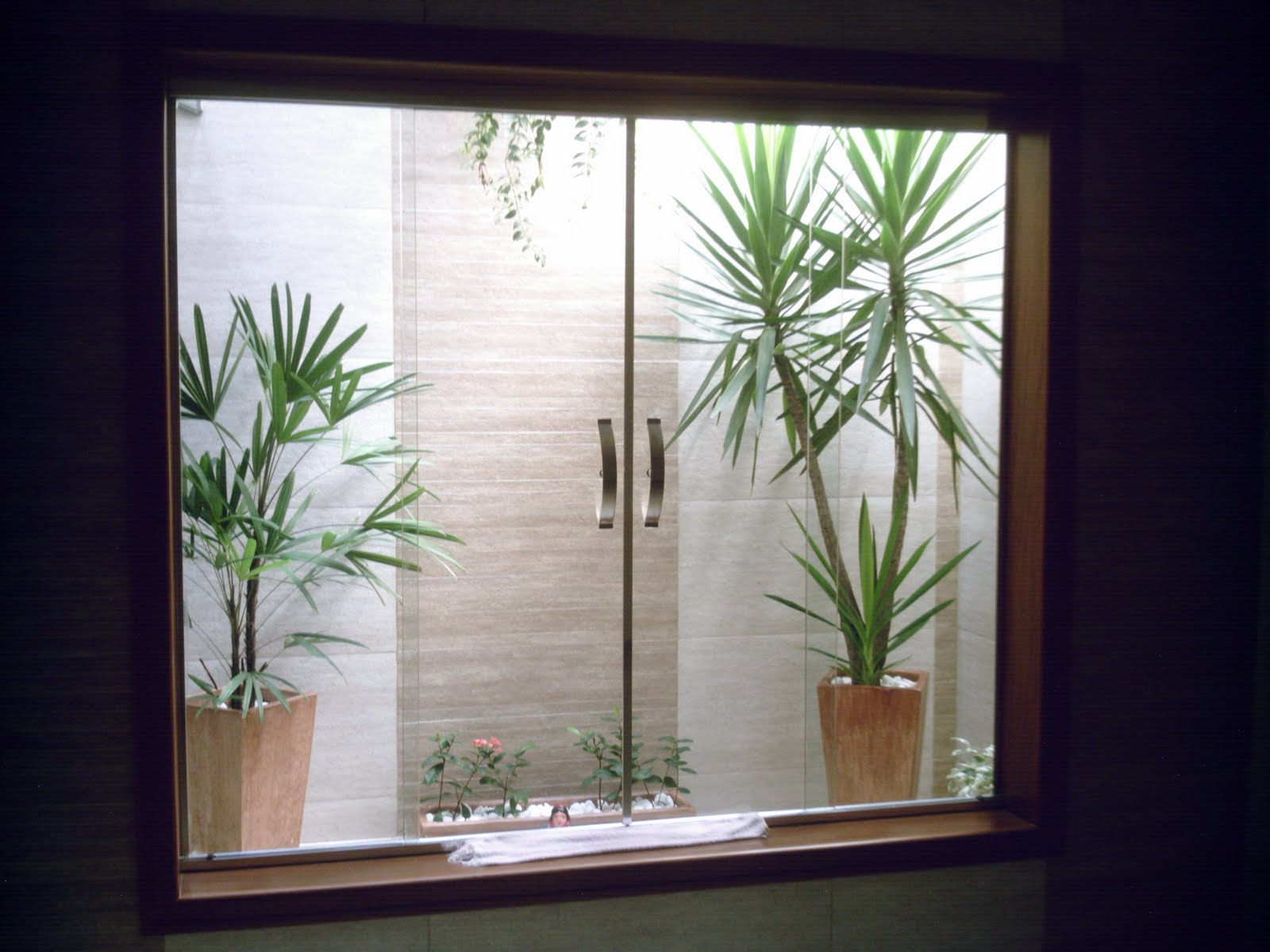 ideias para jardim simples: manutenção vale a pena demais ter um pouco de verde dentro de casa