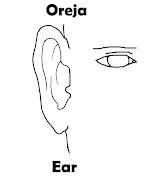 Imagenes para dibujar . Dibujos para colorear (oreja colorear ingles espaã±ol)