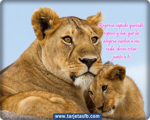 Imagenes De Leone's Con Frases
