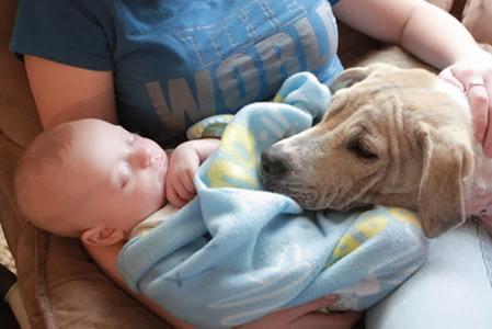 Como Presentar Tu Beb� a Tu Perro Para Socializar