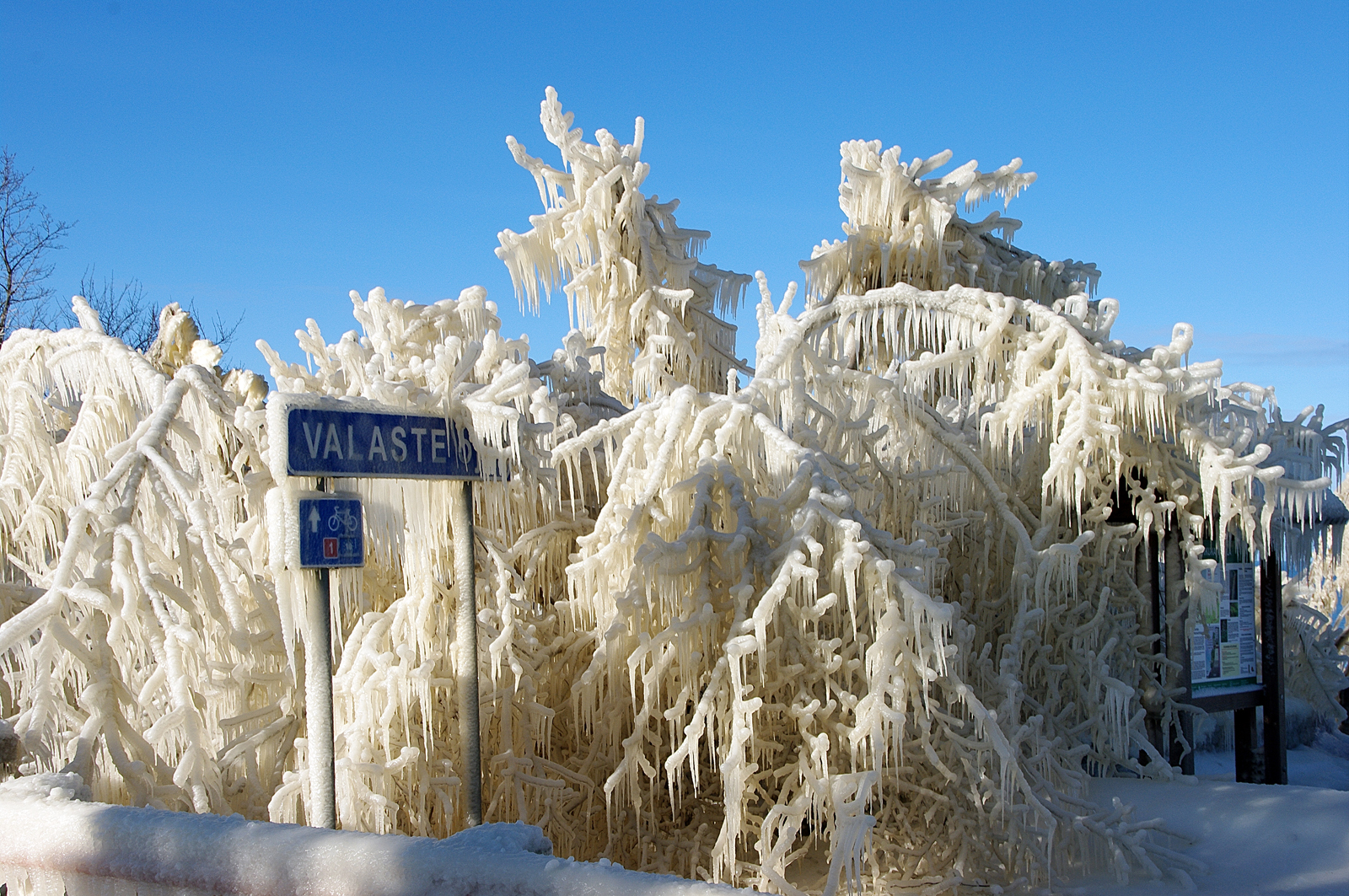 Frozen iced trees , Valaste, Estonia