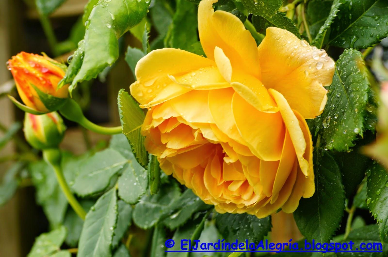 El jard n de la alegr a 07 03 14 for Cancion el jardin de la alegria