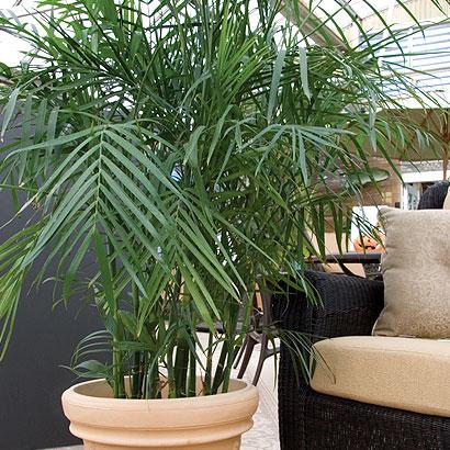 10 plantas de interior que purifican el aire for Plantas de interior limpian aire
