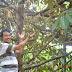 Banyak Macam Varietas Durian Bermunculan; Pilih mana?