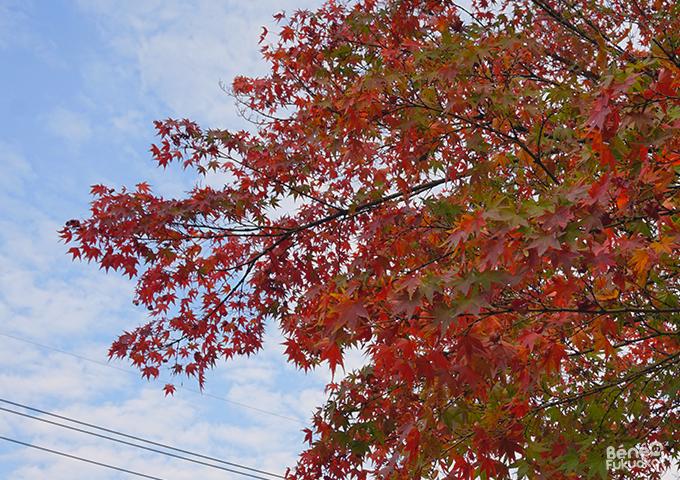 紅葉 - 平尾山荘、福岡