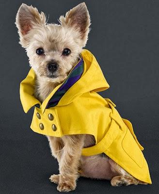 impermeable perro Ralph Lauren