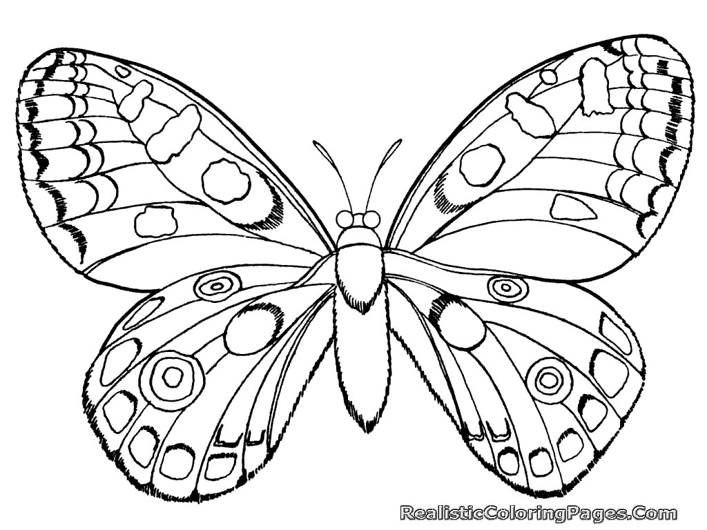 realistic butterflies coloring pages - photo#31