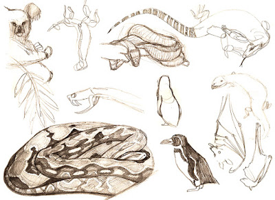 Braelyn Snow-Zoo Sketches