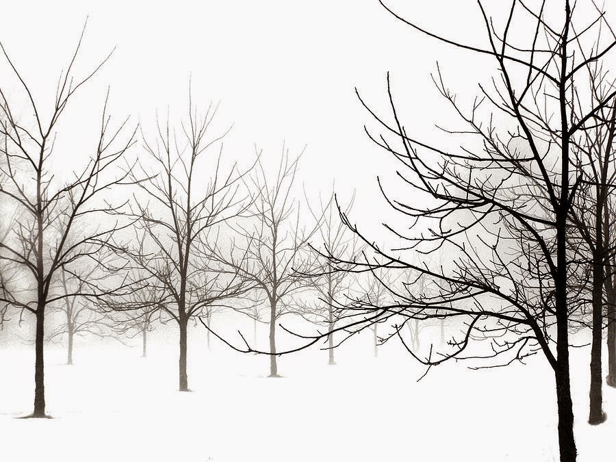Slumbering Walnut Trees