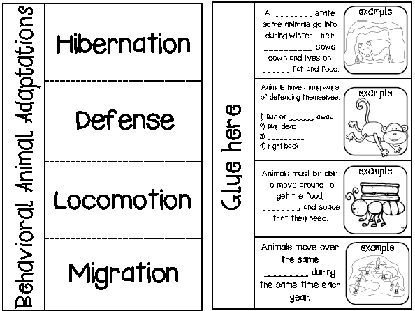 With animal habitats worksheets 1st grade moreover animal adaptations
