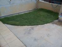 rumput karpet, blogwalking, google, harian metro, baby