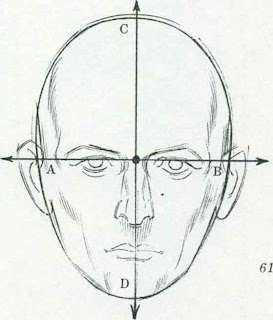 how to draw human face proportions