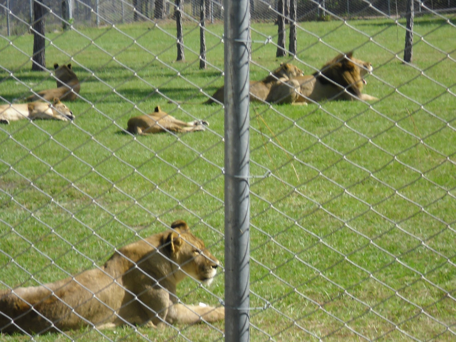 Our florida camping and rving family journal lion country for Lion country safari cabins