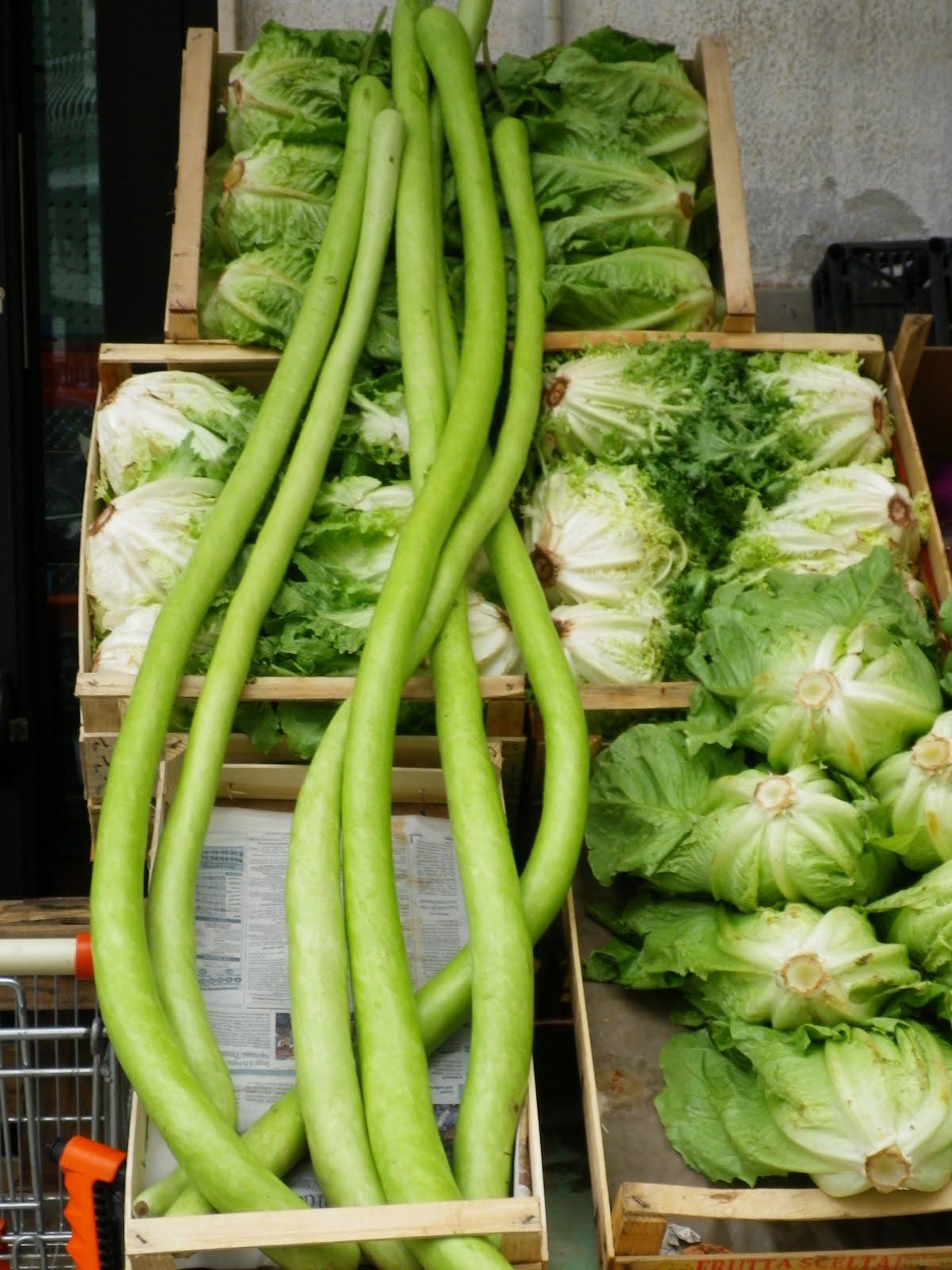 Orto del quinto cucinare il serpente di sicilia for Cucinare le zucchine