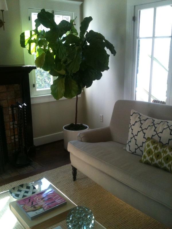 lemon macaron weekend update fiddlehead fig leafs and more. Black Bedroom Furniture Sets. Home Design Ideas