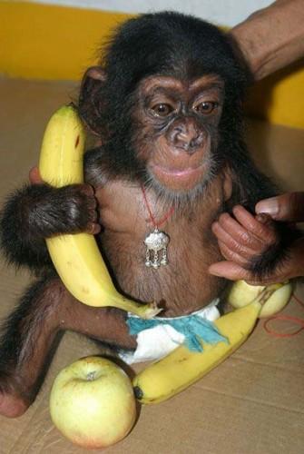 Tomate Cul de singe - semeurfr