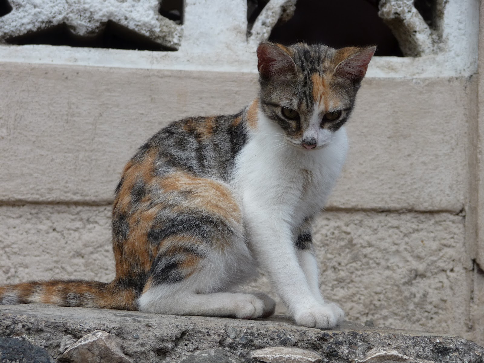 haiti s happy cats and the need for veterinary care in developing countries