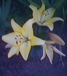 """"""" Una Flor """" : No hay nada mejor que una flor, para alegrar el corazón...."""