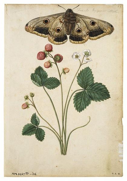 El jardin de los muffins blog de decoraci n vintage y for Laminas de decoracion