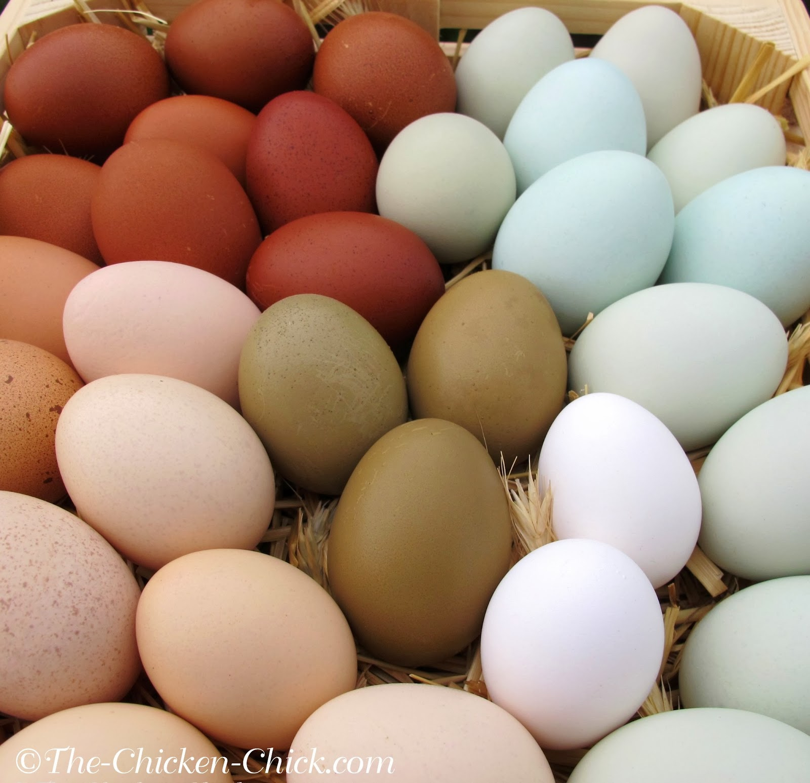Chicken breeds for eggs - The Rate Of Egg Production Can Also Be Generalized By Breed Some Breeds Are Known