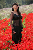 Kajal Agarwal Photos from Jilla Movie-thumbnail-3