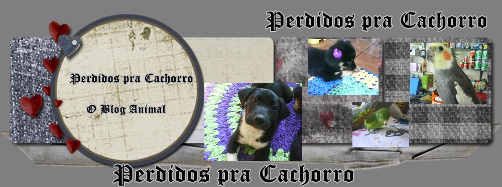 PERDIDOS PRA CACHORRO