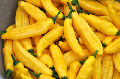 chili citron