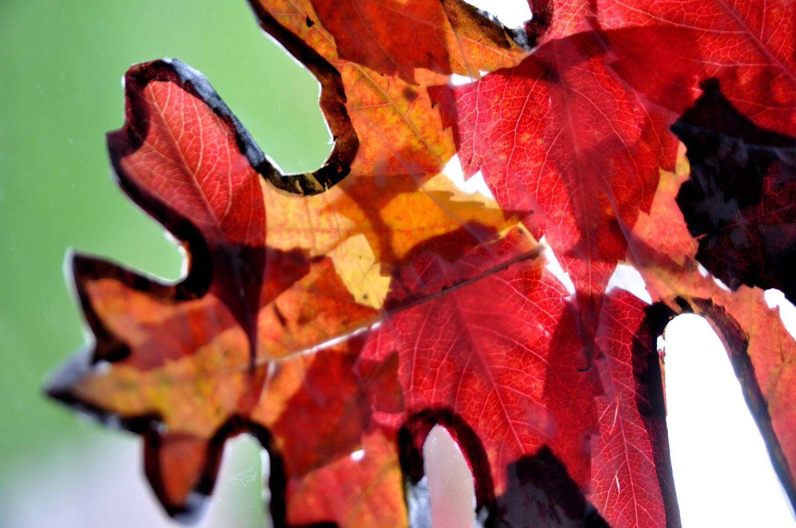autumn leaves sun catchers free printable mamaisdreaming