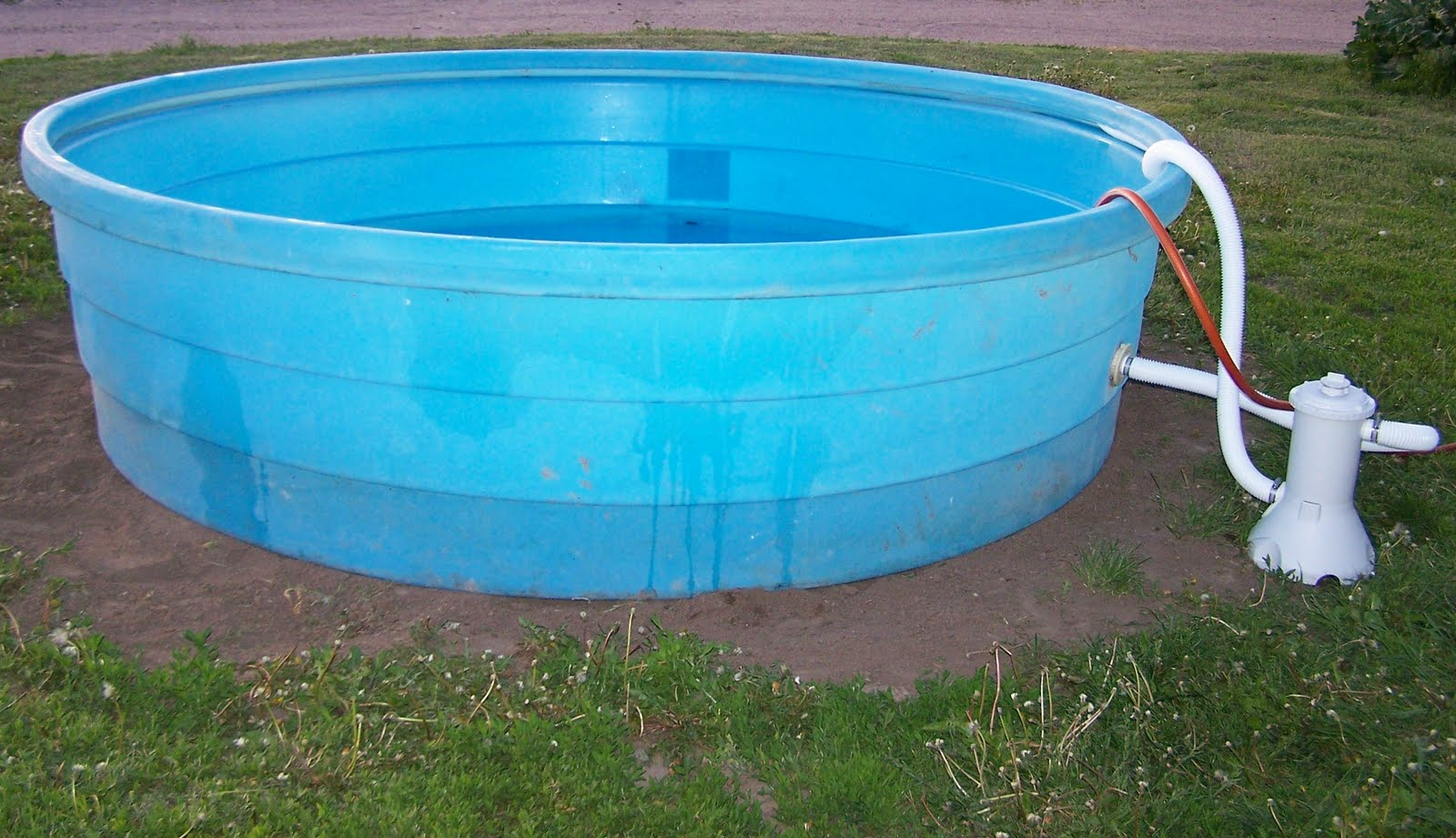 Cattle in the swimming pool - Convert swimming pool to rainwater tank ...