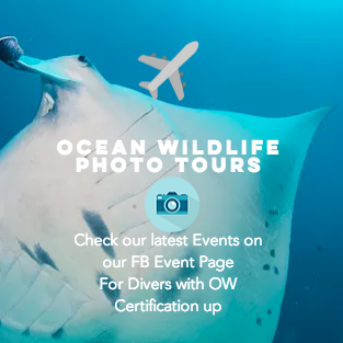 Ocean Wildlife Tours