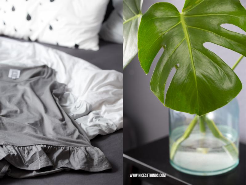 Monstera Fensterblatt Zimmerpflanze Trend