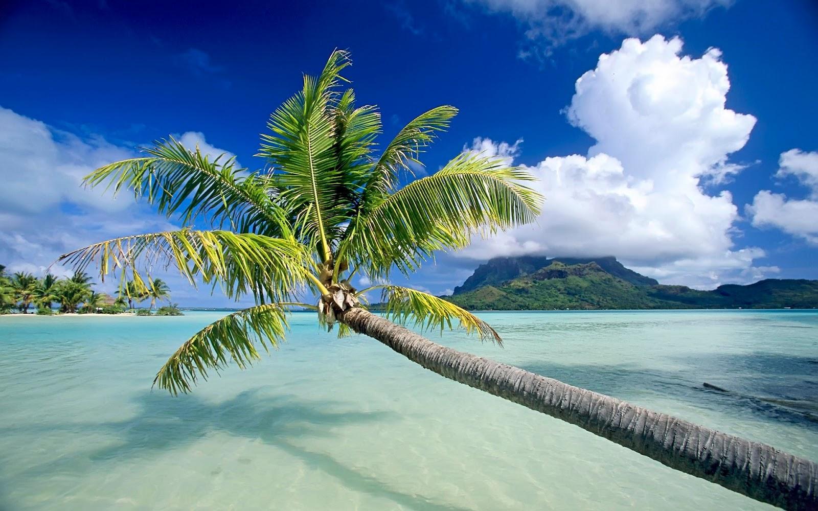 http://3.bp.blogspot.com/-sKbJwui-KFQ/UBJKGrtbDcI/AAAAAAAADpo/Yze1TtyKZMc/s1600/plage-tropical.jpg